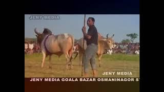 bangladesh bullfight (boxa) rakhal bondu 1