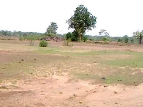 Farm Land at Kaldabri - a glimpse
