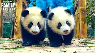 PANDAS New Trailer for Adorable IMAX Documentary