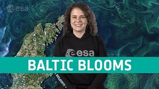 Earth from space: Gotland Baltic Blooms