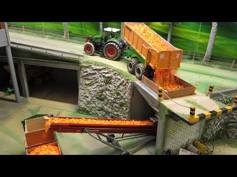 RC TRACTORS at apple harvest farm toys in action