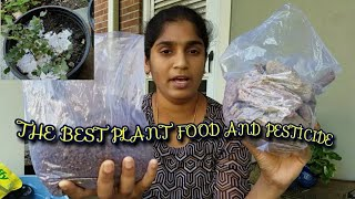 THE BEST PLANT FOOD AND BEST  PESTICIDE: Ultimate Solution for House plants