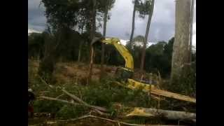 Land Clearing Palm Oil Plantation Borneo - Kebun Sawit Bagian 1