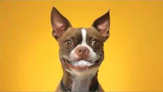 Funny PEDIGREE DENTASTIX Commercial