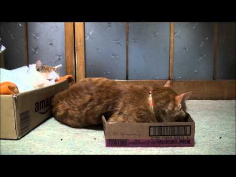 モンプチの箱 Monpuchi box