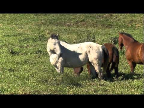 Globo Rural Cavalos idosos recebem tratamento especial depois de aposentados