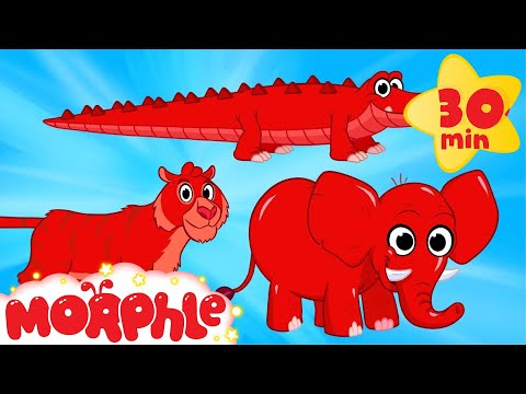 Cute Scary Animal Videos With Morphle  - Tiger, Crocodile, Elephant