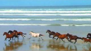 Animales salvajes apareandose videodownload - Animales salvajes apareandose ...