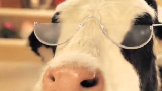 Steamy Spuds and Spectacles -  Anchor Dairy Mini Moovies