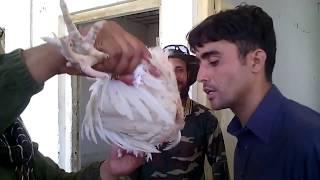 Pakistan Army SSG COMMANDOS training video