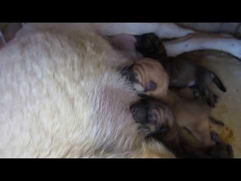 子犬が産まれた