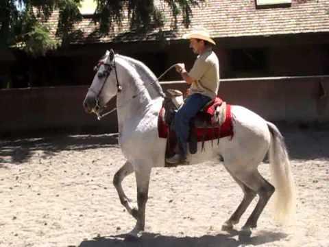 SAN MIGUEL TECOMATLAN EDO. DE MEXICO.CABALLOS CHARROS