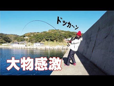 Xxx Mp4 【驚愕】湾内アジの泳がせ釣りにどえらいのキタ 3gp Sex