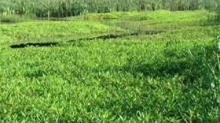 Wetland Basics (Pt 1 of 2)