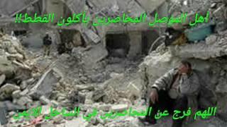اهل الموصل يأكلون القطط- حسبي الله ونعم الوكيل
