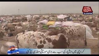 Asia's Biggest Sacrificial Animal Mandi Begins in Karachi