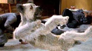 KARATE DOG (Trailer español)