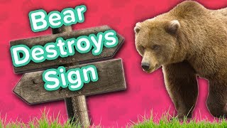 Bear Destroying Signs & Squirrel Riding Fan // Funny Animal Compilation