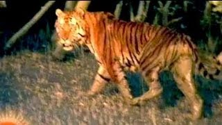 Sunderbans: The largest mangrove forests in the world (Aired: Sep 2004)