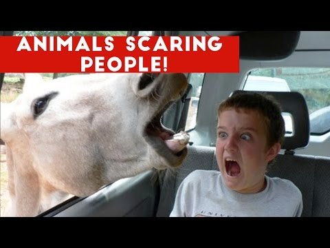 Funniest Animals Scaring People Reactions of 2016 Weekly Compilation Funny Pet Videos