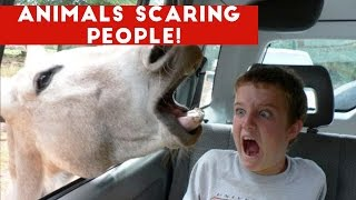 Funniest Animals Scaring People Reactions of 2018 Weekly Compilation | Funny Pet Videos