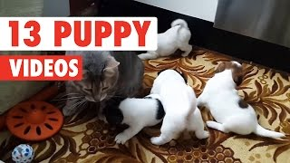 13 Funny Puppies | Cute Dog Video Compilation 2017