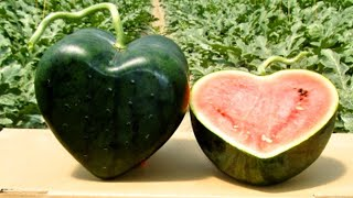 दुनिया के 5 सबसे महंगे फल। Top 5 most Expensive Fruits in the World.
