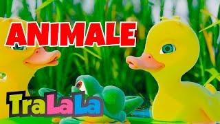 Cinci rățuște - Cântece cu animale 60 MIN | TraLaLa