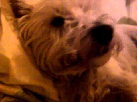 Xxx Mp4 My Dog Leo Xxx 3gp Sex
