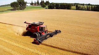 Start of the Harvest - Case IH 8230 & Lexion 560R
