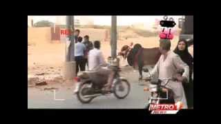Cow funny Clips Zara Hut Kay 2014 in Karachi