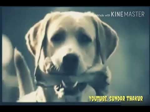 Xxx Mp4 Mene Baf Ki Tune Ki B Funny Doy Video 3gp Sex