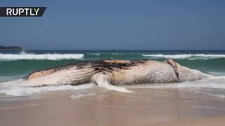 30-tonne whale found dead on Rio's Ipanema Beach