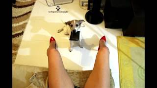 dog asking girl to open her legs for money , with Super Mario Bros song super funny