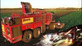 Chicory Root Harvest - Start to Finish   12 row Holmer T4-40 & Terra Felis 2   Loonbedrijf Hack