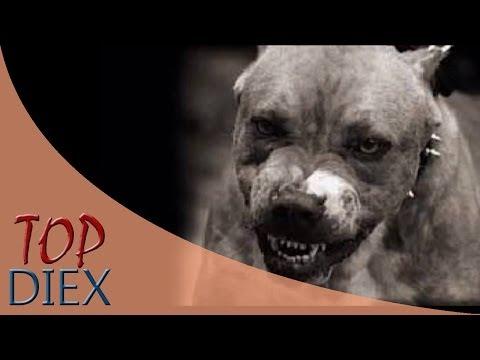10 Perros peligrosos prohibidos