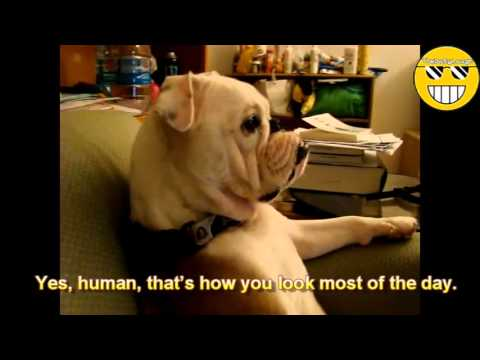 Hilarious Animals Pets Making Fun of Their Owners