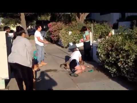 Real Dog Attack (Pitbull attack to a little dog)