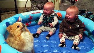 FUNNY TWIN BABIES Laughing Hysterically at Pomeranian Dog - CUTE BABIES and PUPPY