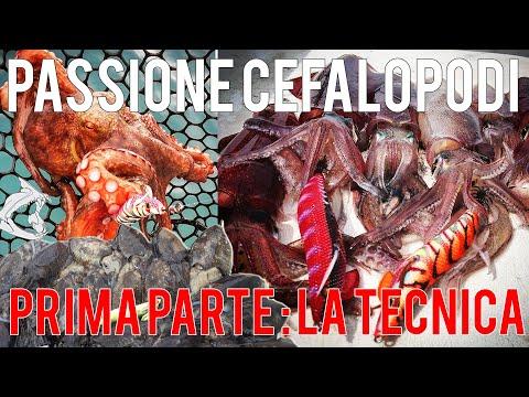 Passione cefalopodi pesca ai calamari dalla barca La Tecnica 1°parte