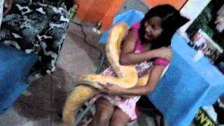 menina pega cobra pitom