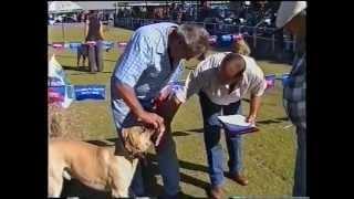 Boerboel National Show Part 2