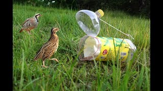Awesome Quick  Plastice Bottle Bird Trap - How To Make A Plastice Bottle Bird Trap That Work 100%