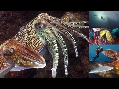 Xxx Mp4 Reef Life Of The Andaman Full Marine Biology Documentary 3gp Sex