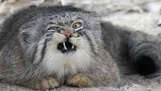 Angry Cats Ready To Fight And Kill.. OMG! (NEW)