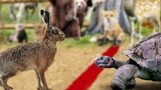 La liebre y la tortuga fabula con moraleja de cuento narrado en español