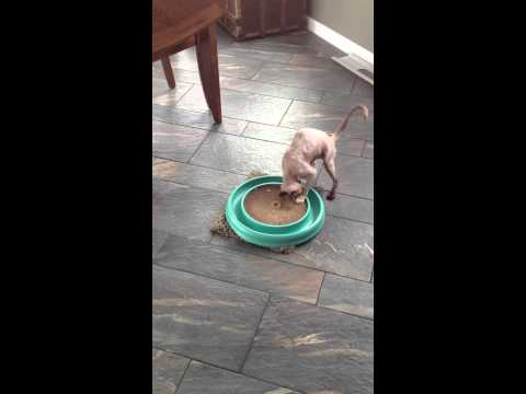 Saffie playing
