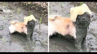 Dogs vs. Mud | The Happiest Dogs In The World | Funny Dogs Compilation.