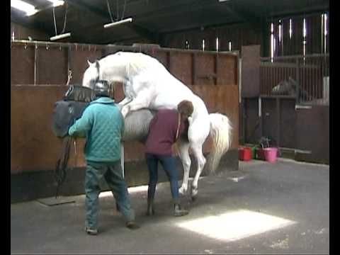 Collection from horses for Artificial Insemination at Glenwood Stud