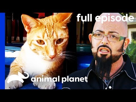 This Kitty Keeps Attacking His Owners My Cat From Hell Full Episode